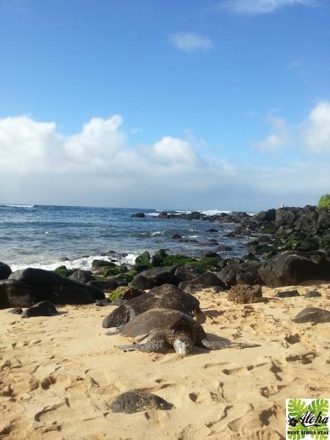 パシフィックモナーク Hawaii Must 003