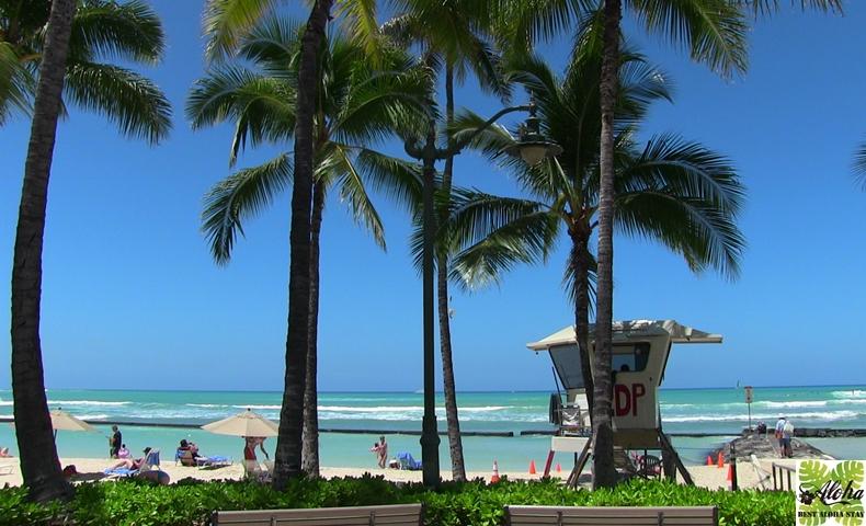 パシフィックモナーク Hawaii Must